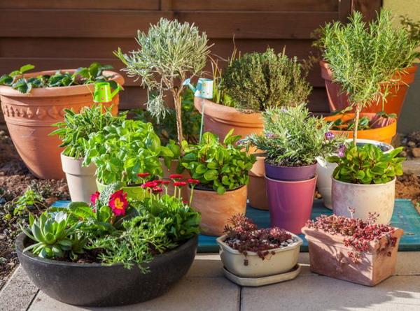 Garden design trends 2022